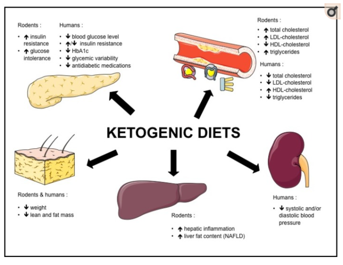 Keto in rodents and humans - source Nutrients. 2017 May 9
